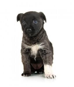 CaroCroc puppy hondenvoer