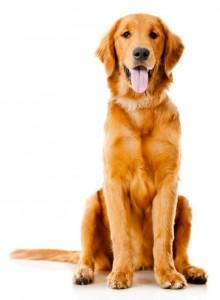 CaroCroc Adult hondenvoer