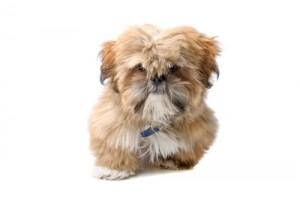 Nutro senior hondenvoer
